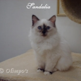 Olimpo's Sandalia