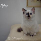 Olimpo's Sefora