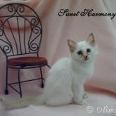 Olimpo's Sweet Harmony