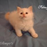 Olimpo's Sidney