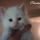 Olimpo's Sebastiano