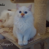 Olimpo's Sophie