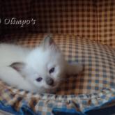 Olimpo's Te Quiero