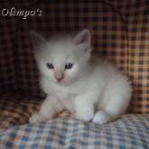 Olimpo's Tristan