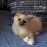 Olimpo's Valentina